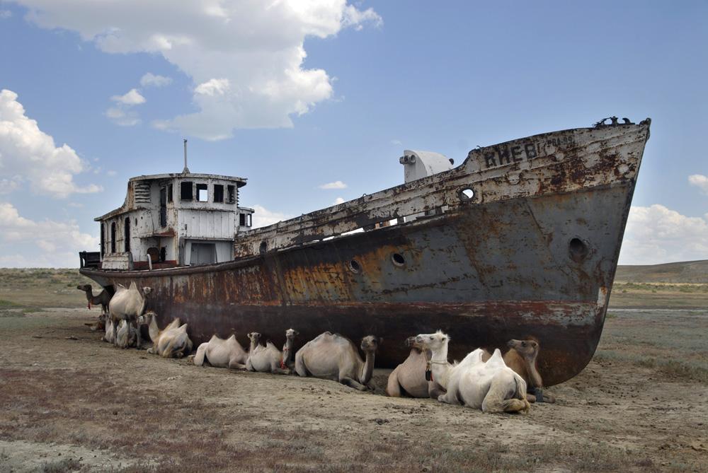 Верблюды отдыхают у ржавого корабля, где раньше было Аральское море